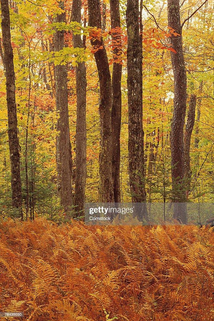 Autumn woodland : Stockfoto