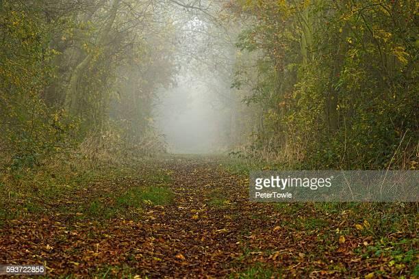 autumn woods in mist - november stock-fotos und bilder