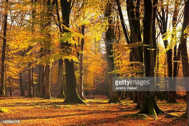 autumn woods - exmoor national park 個照片及圖片檔