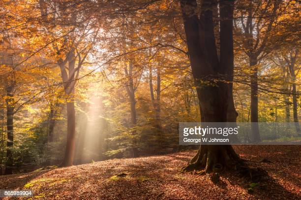 autumn woods #004 - woodland stock pictures, royalty-free photos & images