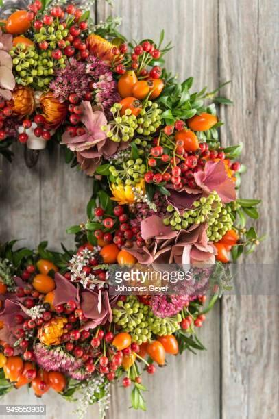 Autumn wreath cutout on wooden wall, tied with rosehip (Rosa canina), heather (Calluna vulgaris), hydrangea (hydrants macrophylla), ivy (Hedera helix), Boxwood (Buxus sempervirens), orpine (Sedum telephium), strawflower (Helichrysum bracteatum)