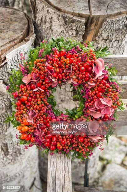Autumn wreath tied to birch trunk with rosehip (Rosa canina), boxwood (Buxus), Heather (Calluna vulgaris), juniper (Juniperus), hydrangea (Hydrangea)