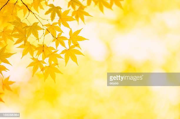 秋黄色の色
