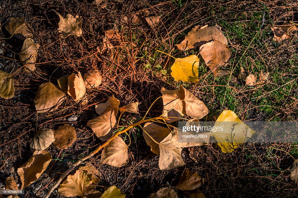 autumn yellow leaves in the middle of the moss : Stock-Foto