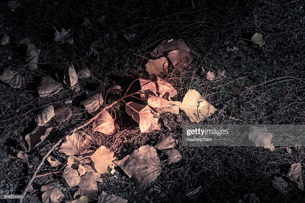 autumn yellow leaves in the middle of the moss : Stock Photo