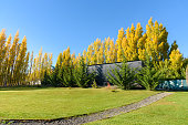 Autumn yellow trees, green grass and blue sky