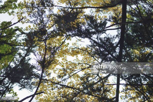 autumnal abstraction - mulhouse stock pictures, royalty-free photos & images