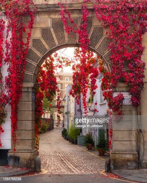 autumnal archway ii - autumn stock pictures, royalty-free photos & images