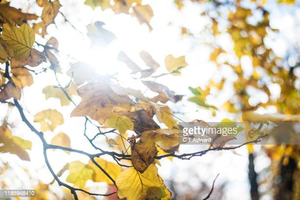 autumnal colours - port talbot stock pictures, royalty-free photos & images