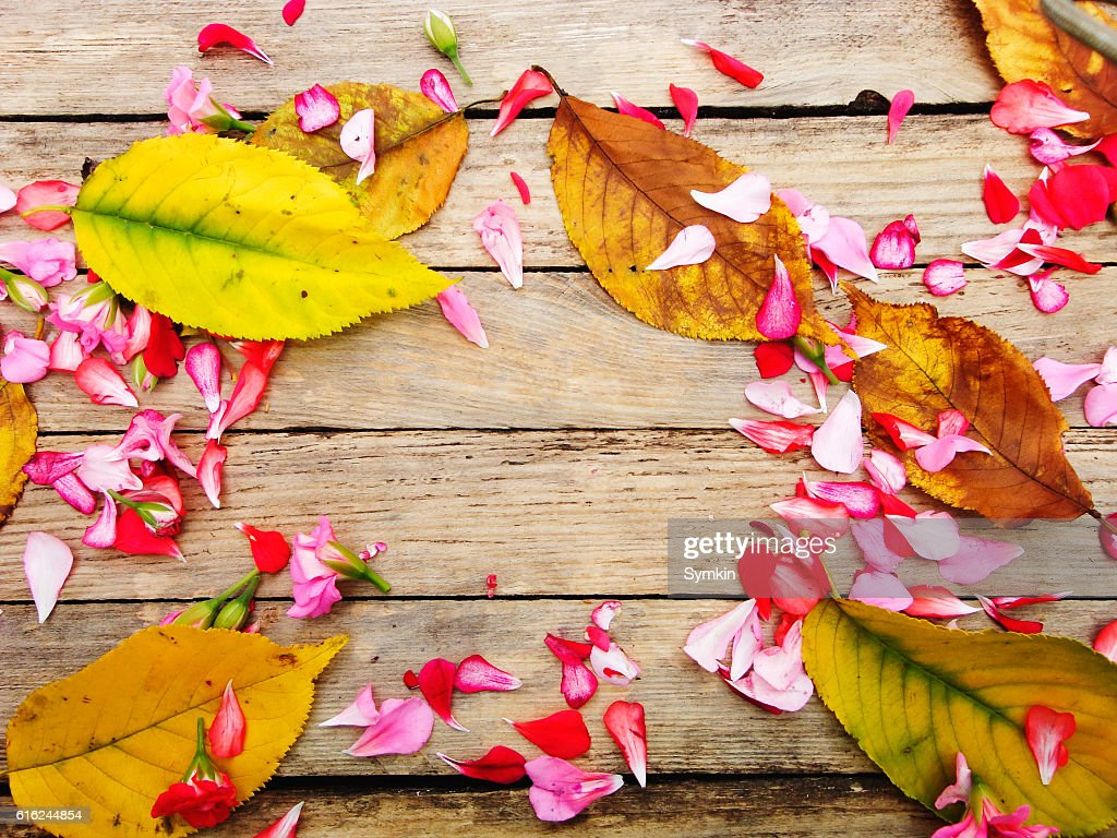 Autumnal composition of colorful flowers and yellow leaves : Stock Photo