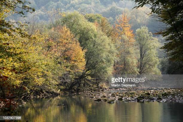autumnal floodplains on the kupa river, risnjak national park, gorski kotar region, croatia - rio kupa - fotografias e filmes do acervo