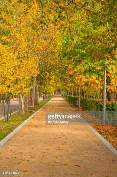 autumnal footpath in casa de campo park - casa stockfoto's en -beelden