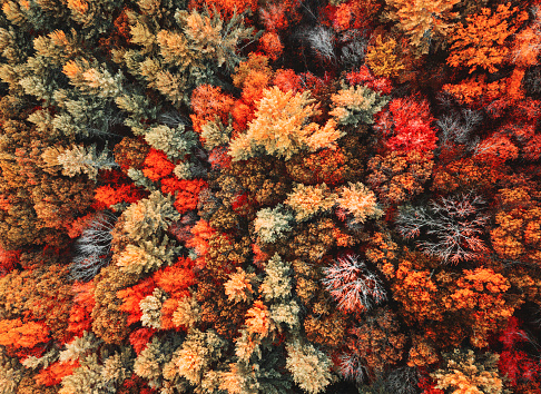 autumnal forest aerial view 1184782767
