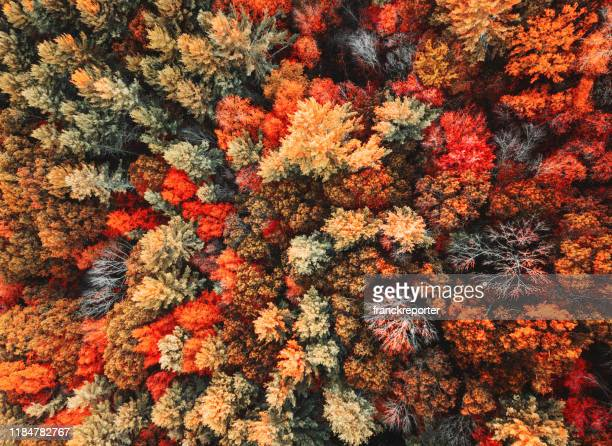 autumnal forest aerial view - autumn stock pictures, royalty-free photos & images