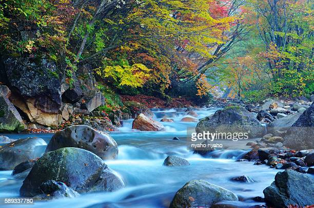autumnal leaves and a river in the matsukawa valley. takayama, gifu prefecture, japan - takayama city stock pictures, royalty-free photos & images