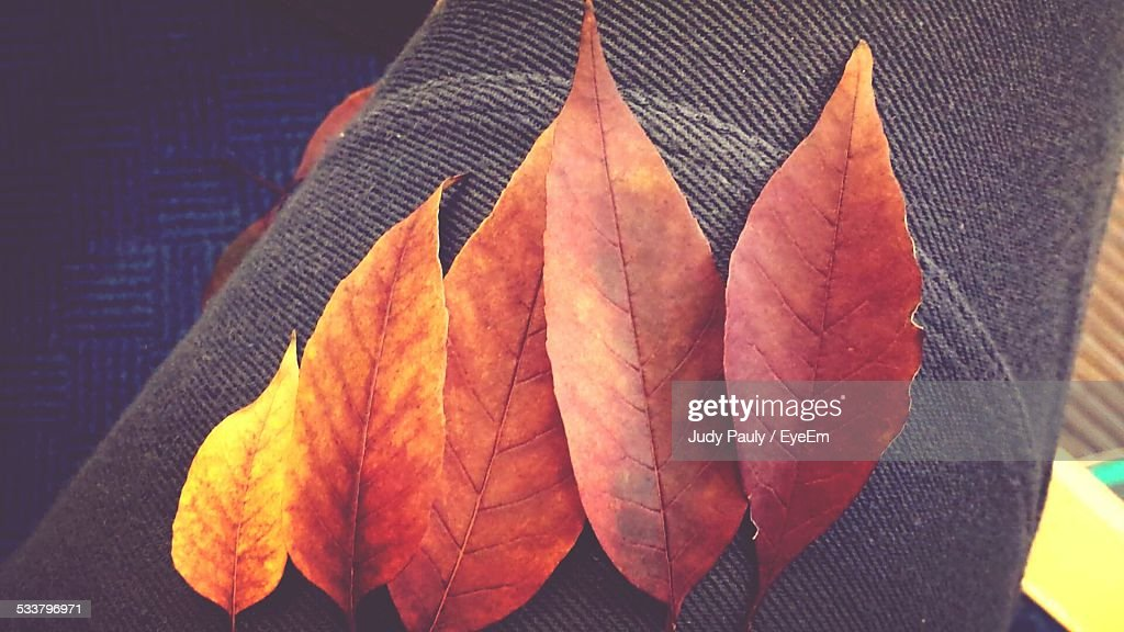 Autumnal Leaves Lying On Armchair : Foto stock