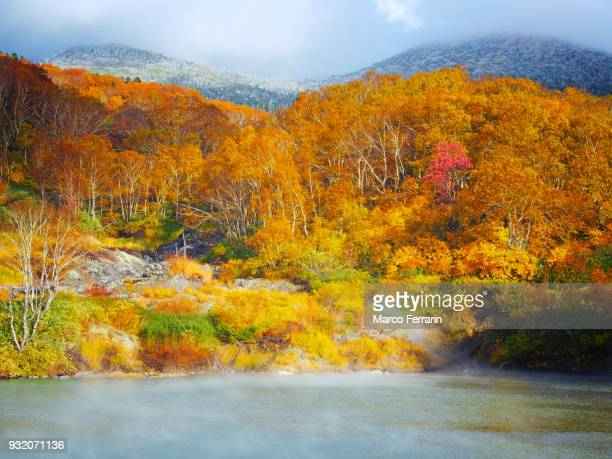 autumnal leaves of beech and maple, view of national park in northern japan - 十月 ストックフォトと画像