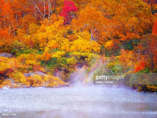 autumnal leaves of beech and maple, view of national park in northern japan - 紅葉 ストックフォトと画像