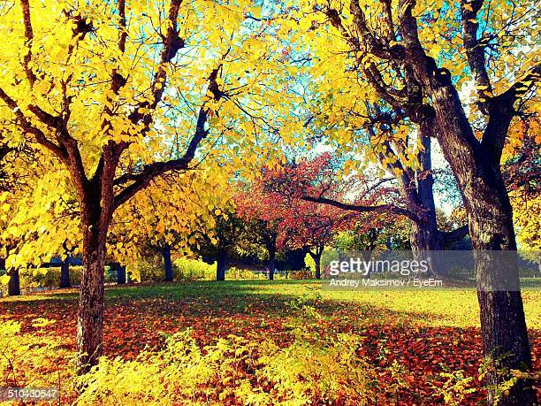 Autumnal leaves on landscape along trees