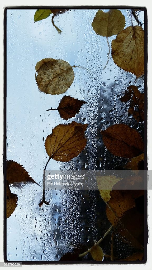 Autumnal Leaves On Wet Glass : Foto stock