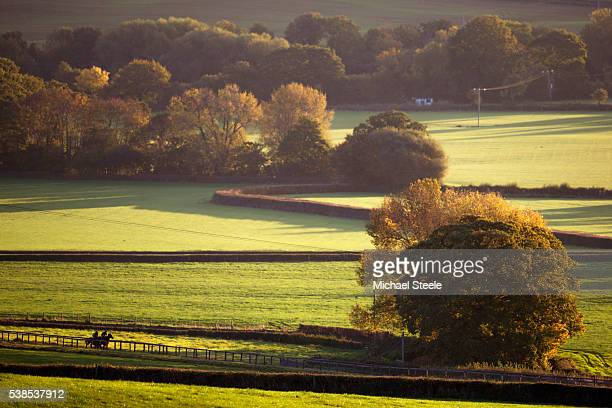 Autumnal light on the woodchip track at Sandhill Racing Stables on October 20 2015 in Minehead England Sandhill Racing Stables set in 500 hundred...