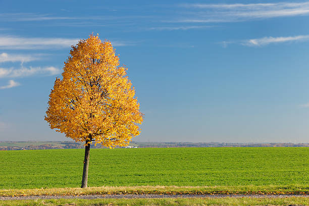Autumnal Lime Tree Wall Art