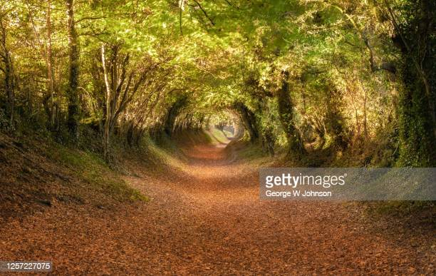 autumnal pathway - dawn stock pictures, royalty-free photos & images
