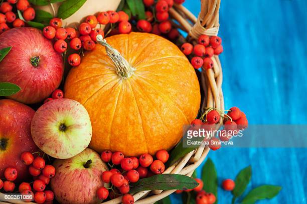 autumnal pumpkin, apples and rowan-berry - crushed leaves stock pictures, royalty-free photos & images