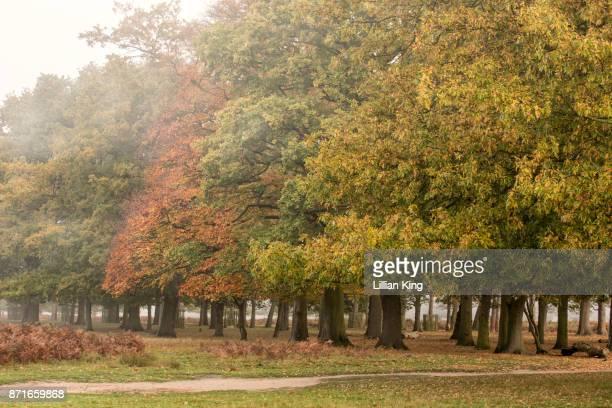 autumnal sunrise - hampton court stock pictures, royalty-free photos & images