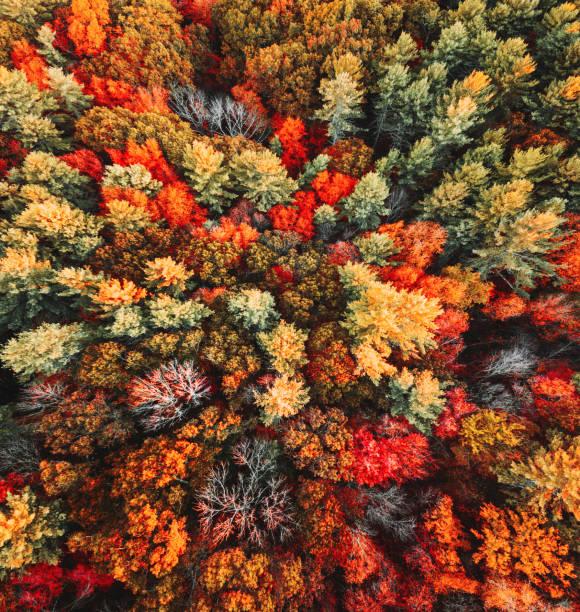 秋天樹鳥瞰圖
