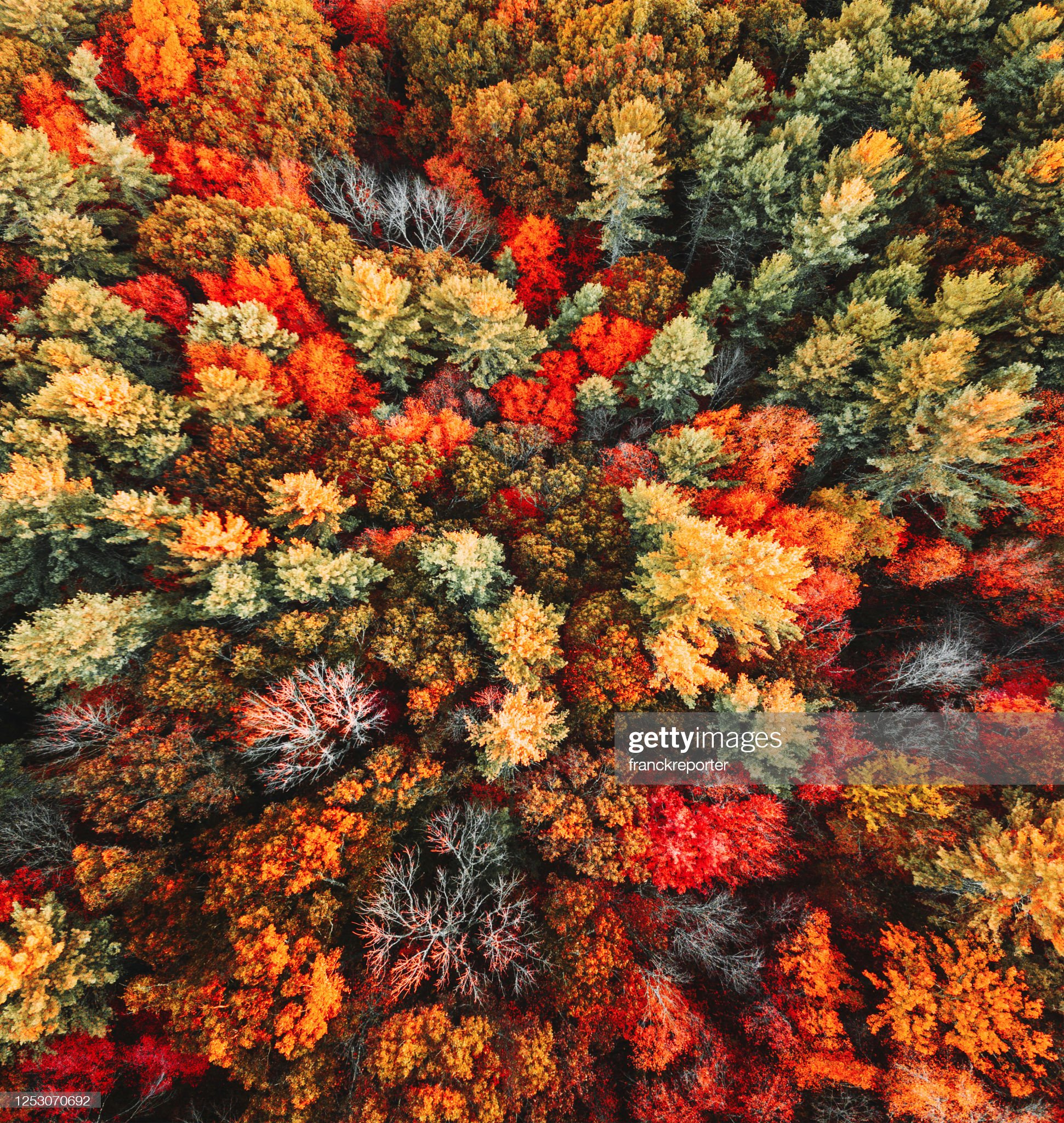 autumnal tree aerial view : Stock Photo