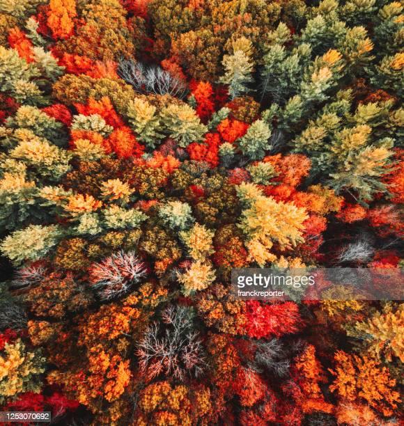 vue aérienne d'arbre automnale - automne photos et images de collection
