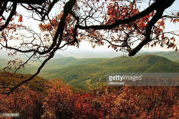 autumnal tree branch against woods and hills - shenandoah_national_park stock pictures, royalty-free photos & images