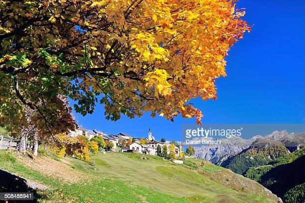 Autumnal tree, Guarda, Lower Engadine, Graubunden, Switzerland
