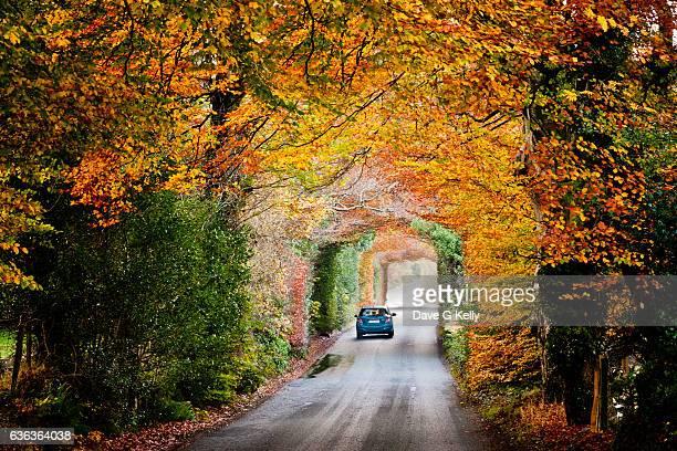 Autumnal Tree Tunnel