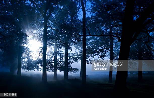 autumnal trees and mist. - alex saberi stock pictures, royalty-free photos & images