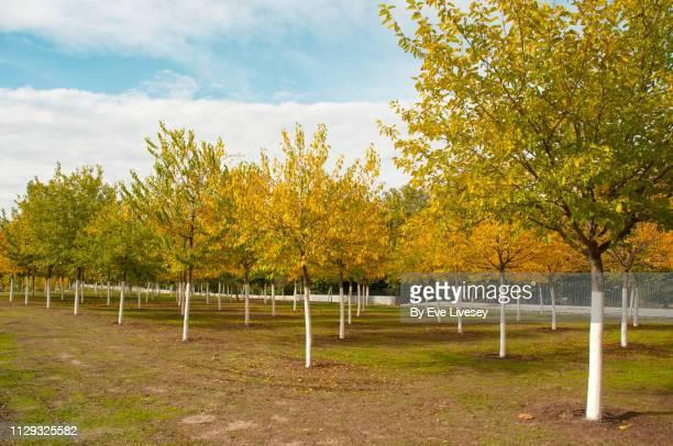 autumnal trees in casa de campo park - casa stock-fotos und bilder