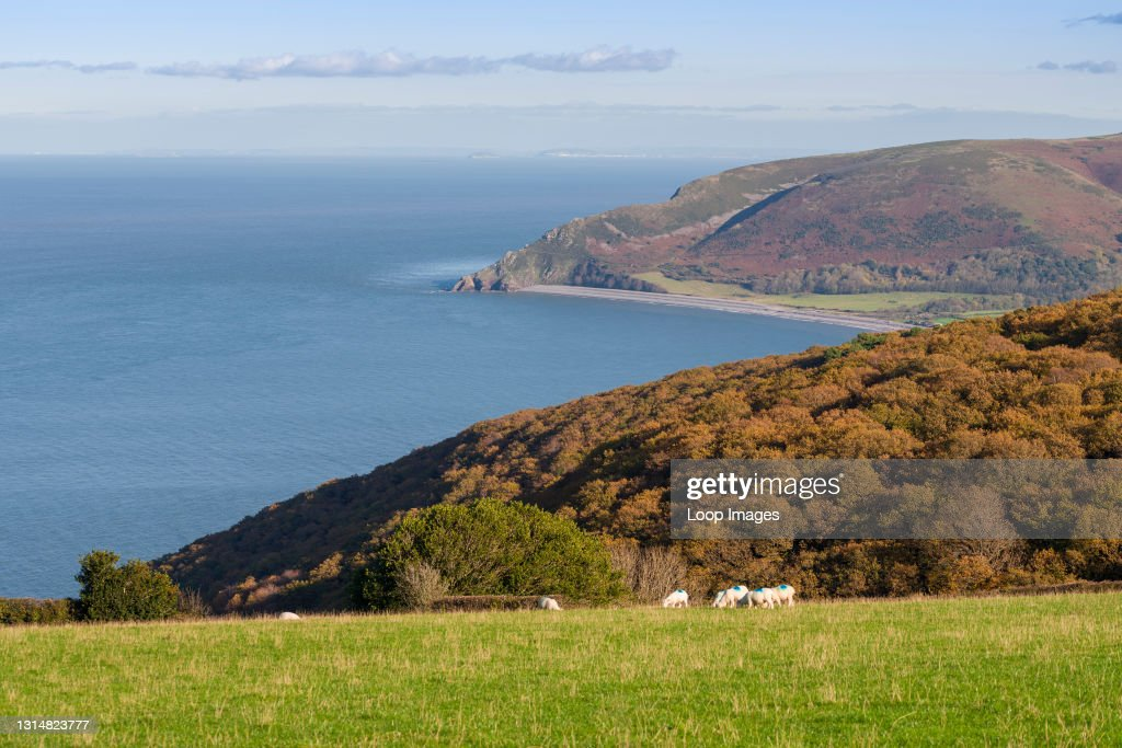 Autumnal view over Worthy Wood to Bossington Hill and the Bristol Channel in Exmoor National Park : News Photo