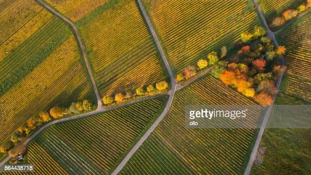 Herbstliche Weinberge - Luftbild