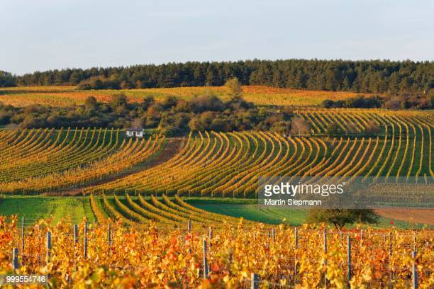 Autumnal vineyards, Neckenmarkt, Mittelburgenland wine-growing region, Burgenland, Austria