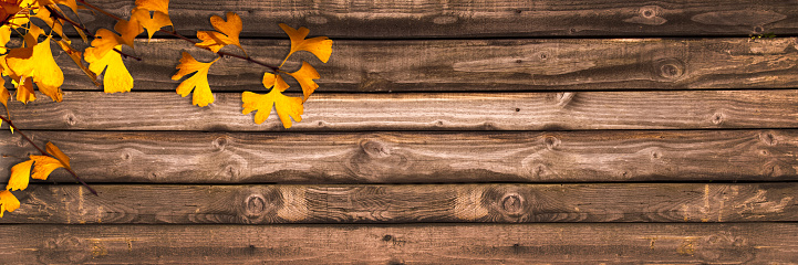 Autumnal wooden panoramic background with ginkgo biloba leaves, autumn concept 856943108