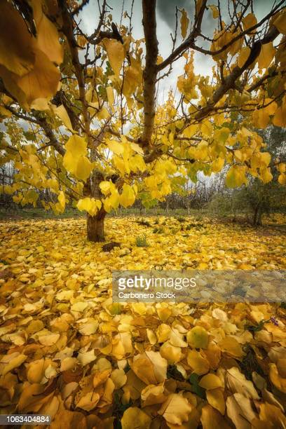 Autumnal yellow leaves on branches and soil