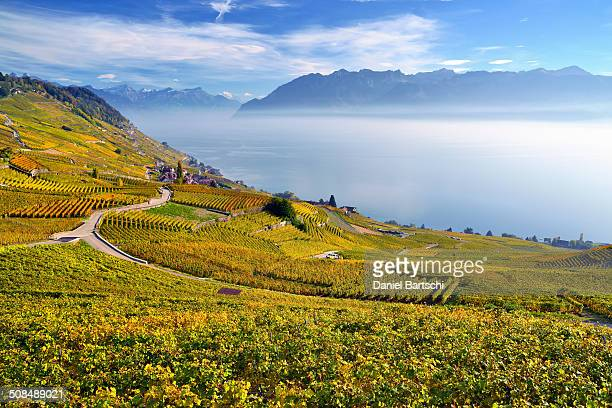 autumn-coloured vineyards with mist, at lake geneva, lavaux, unesco world heritage site, epesses, canton of vaud, switzerland - kanton waadt stock-fotos und bilder