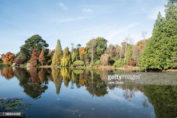 autumn/fall colours and reflections - lake stock pictures, royalty-free photos & images