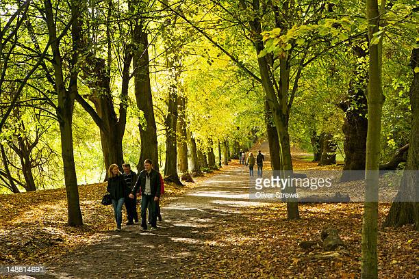 autumnã¡leaves in hampstead heath. - hampstead heath stock pictures, royalty-free photos & images