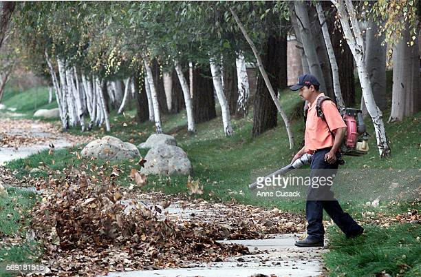 Autumn's beautiful show turns into todays debris to be cleaned up as Gustavo Guzman Valeriano who works for Sunridge Landscaping and Maintenance...