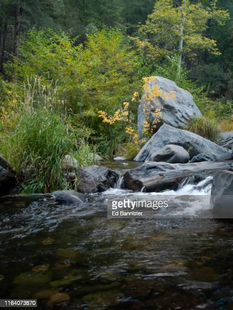 autumn's onset in oak creek canyon - oak creek canyon - fotografias e filmes do acervo