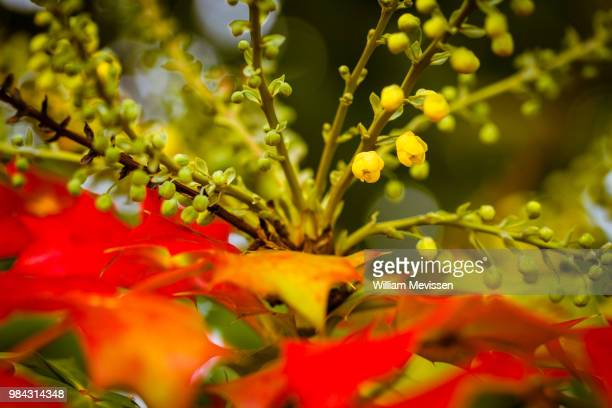 autumn's surprise - william mevissen stock pictures, royalty-free photos & images