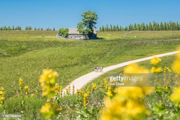 auvergne - haute-loire - saint james way - hikers arriving at the domaine du sauvage. - auvergne stock pictures, royalty-free photos & images