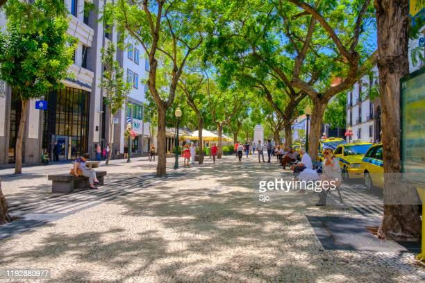 """avenida arriaga no funchal na ilha da madeira durante um belo dia de verão - """"sjoerd van der wal"""" or """"sjo"""" - fotografias e filmes do acervo"""